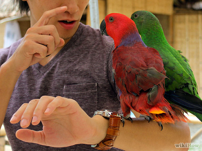 BilingualParrot1AbCd